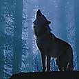 17話  銀狼